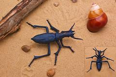 Carabus blaptoides - Kota Imai (P. Colman) Tags: origami paper insect beetle