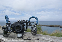 Set for macro. (hsacdirk) Tags: north wales diving trefor pier porth ysgaden macro jellyfish