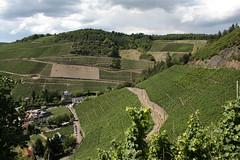 ckuchem-1456 (christine_kuchem) Tags: ahrtal anbau anbaugebiet eifel felsen rotweinwanderweg schiefer schieferfelsen sommer weinanbau weinberg weintraubenanbau weintrauben
