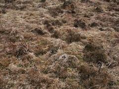 _2360121 (JMarshall78) Tags: nest nests ornithology birds wildlife devon