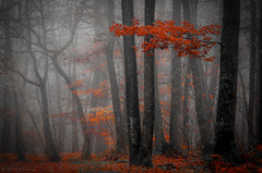 Forest mood! (pat.thom974) Tags: forest trees red