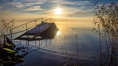 Seaside sunrise (Jens Haggren) Tags: olympus em1 sea seascape water sun sunrise morning sky clouds light reflections jetty reed landscape birds nacka sweden