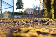 (colorinspirit) Tags: moss goldenhour warmlight nature branches details light