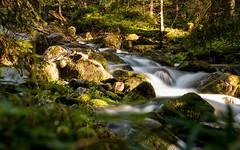 Tatry (RafalGorski) Tags: potok wodospad strumien gry kamienie nature tatry waterfall river mountain stone water sunlight sunset forest nikon nikor