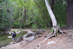 Pfeiffer Big Sur ( Esther ) Tags: california statepark camping river bigsur pfeifferbigsur