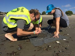 ESRM seniors Tevin Schmitt and Michaela Miller sampling infauna at Goleta Beach 05-21-15