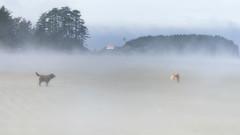 Canines in the Mist (John A. McCrae) Tags: dog mist canada beach fog island labrador pentax britishcolumbia vancouverisland pacificocean tofino pacificrim lakelandterrier lennardisland chestermanbeach thefin funwithfin finwick pentaxk5 lennardislandlighthouse