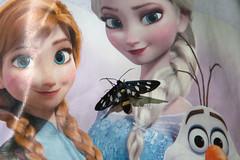 Syntomis phegea (Andrea Lugli) Tags: canon butterfly eos sigma farfalla 18250 450d syntomis phegea