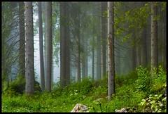 Fogrest II (ELtano86) Tags: foresta bosque bosco forest alberi albero tree trees planta plantas fog foggy mist misty morning nebbia neblina nebbiosa eltano86 natura natural nature green italy