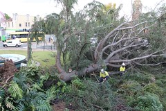 Maitland City Library, N.S.W. (maitland.city library) Tags: maitland newsouthwales city library storm 2015 damage tree removal may