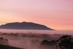 Misty Mornings (alisonrobinson) Tags: sky farm rural australia fog sunrise