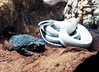 Edit 1 (Stonehenge 68) Tags: zoo birmingham snake alabama lizard plantation antebellum birminghamzoo arlingtonhouse