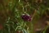 20160808_008_2 (まさちゃん) Tags: 雌しべ 雄しべ 雌蕊 雄蕊 日陰の花
