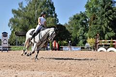 DSC_0993 (2) (ploufjf_64) Tags: paus show jumping chevaux pau 2016