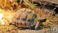 Tortoise close (7716galaxy) Tags: nature colors animals macro sea beach zoo park mushrooms tortoise chameleon mouse turtle sun sky water flying