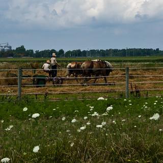 Amish Boys with Hay Rake