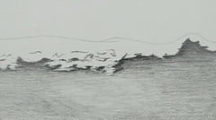 20130327 WoutvanMullem Waves on the beach 07 (Wout van Mullem) Tags: wave waves beach sea animation still pencil wout van mullem