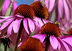 Flower (heiko.moser ( 9000000 views )) Tags: flora flower flowers floral natur nature natura nahaufnahme entdecken eyecatch discover canon color blume blte farbig closeup heikomoser