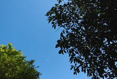 Meu Cu (MARK2K16) Tags: sky blue lightblue darkblue green summer countryside dramatic drama art instagram inspiration indie vsco tumblr tree trees nature