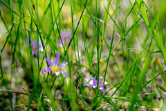 Summer's coming (Derek Midgley) Tags: dsc04809 abstract grass flowers weeds