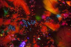 DMM Planets (Yuliya Libkina) Tags: japan odaiba travel shine exhibition planets dmm dmmplanets art asia technology crystal universe accumulated light installation teamlab romantic romance tokyo flowers digital digitalart projection couple sweet