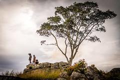 The Dani's at Batu (tehhanlin) Tags: indonesia papua wamena westpapua irianjaya sony a7r2 a7rm2 ngc portrait humaninterest nusantara thedanis koteka ikipalin lembahbaliem baliemvalley travel visitindonesia