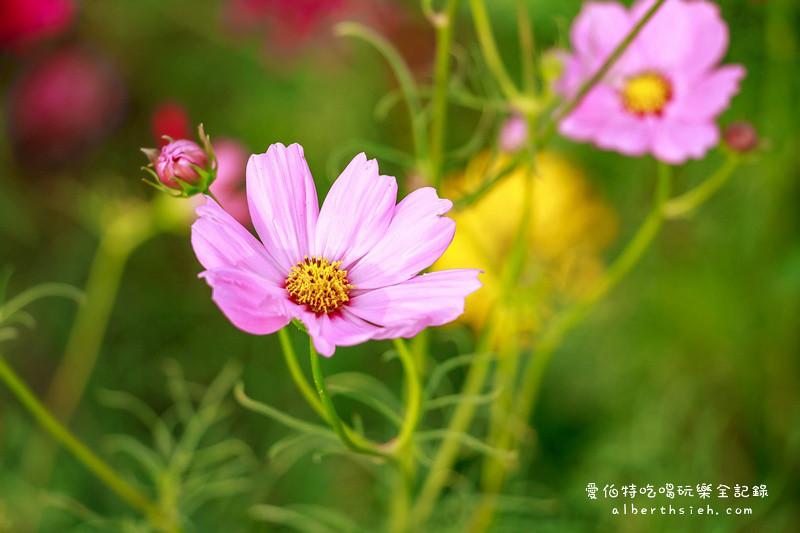 2016桃園地景藝術節:九斗花海