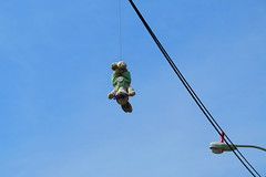 Hanging Bunny (elbrozzie) Tags: stuffedtoy toy