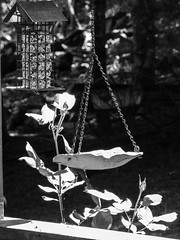 Backyard Still-Life - Black and White