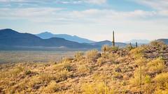 Rincon Mountains (bugeyed_G) Tags: arizona cactus mountains southwest nature desert earlymorning saguaro scrub rincon bugeyedg