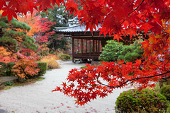 Kyoto 8885 (kbaranowski) Tags: 2016krzysztofbaranowski krzysztofbaranowski nihon nippon autumn maple japanesemaple fallfoliage colorful nature beautyinnature garden japanesegarden kyoto zen japaneseculture