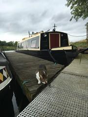 (Sam Tait) Tags: cat turbo narrowboat river soar redhill marina canal cut live aboard kitty feline shorthair white tabby