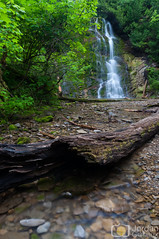 Powerful (grimaux.jordan) Tags: great greatest power powerful waterfall river nature scape landscape water fall dead tree clear forillon national park canada qubec