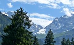 bluemlisalp (berber hoving) Tags: mountains snow year since walk first