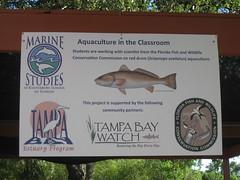 Learn more (MyFWC Research) Tags: aquaculture hatchery fishhatchery stockenhancement school education outreach portmanatee florida fwc myfwc myfwccom