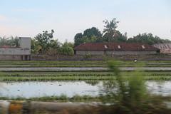 seseh-2016.jpg (James Popple) Tags: bali indonesia seseh
