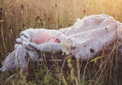 Henry (Shannon Alexander Photography) Tags: newborn newbornphotography baby fineartphotographer fineartphotography field summer vermontphotographer goldenhour canon macro100mm28l