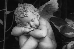 Sleepy little Cherub (jasohill) Tags: sleeping bw monochrome statue japan garden photography grey wings cherub
