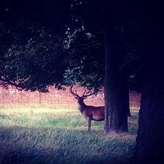 Algures em Richmond Park! (Helder_photography) Tags: rvores arvoredo veado parque trees red deer richmondpark london filters