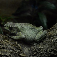 Bronx Zoo (photolife104) Tags: photography bronx bronxzoo ilovephotography frog nycphotography photographyislif reptiles begginer zoo