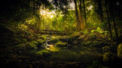Forest Pool (Augmented Reality Images (Getty Contributor)) Tags: australia bridge canon forest landscape leaves leefilters light longexposure nationalpark palms pool queensland rainforest rocks shadow sun sunshinecoast trees water