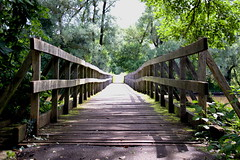 Let's go... (Giuliana_V) Tags: nature sky sun sunny pretty flowers tree bridge clouds beautiful photooftheday love green weather day mothernature