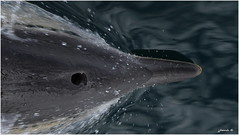 Delfin (jjbesadarico) Tags: wow