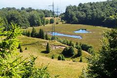 a tőzegláp / the muskeg (debreczeniemoke) Tags: nyár summer láp bog tőzegláp muskeg tăulchendroaiei tó pond kék blue tópart lakeside gutinhegység gutinmountains olympusem5