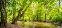 Nature (Nitroklaus) Tags: tree water stream green light calm nature tokina 17mm rmc
