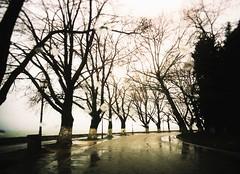 * (PattyK.) Tags: ioannina giannena giannina epirus ipiros mycity whereilive lovelycity rain winter trees cold february 2015 ilovephotography myphotos        rainyday