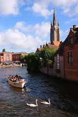 DSC01852 (Fotofreaky2013) Tags: brugge rondvaart zwaan zwanen swan boot boat