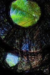 Within Stickwork created by Patrick Dougherty, McKee Botanical Garden, 2016-06-21 (Nikonfan1346) Tags: artdigital floridaatlanticcoast