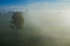 Misty (Masa_N) Tags: bluesky trees winter mist australia allenview misty morning queensland  au scenicrimregion