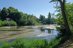 Ciron (Indre) (sybarite48) Tags: ciron indre france pont brcke bridge   puante  ponte  brug most  kpr rivire fluss river   ro  fiume  rivier rzeka rio  nehir renonculeaquatique ranunculusaquatilis